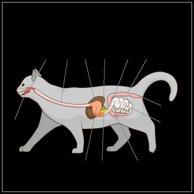 猫は、乾燥した砂漠地帯を起源にもつ、完全な肉食の動物です!
